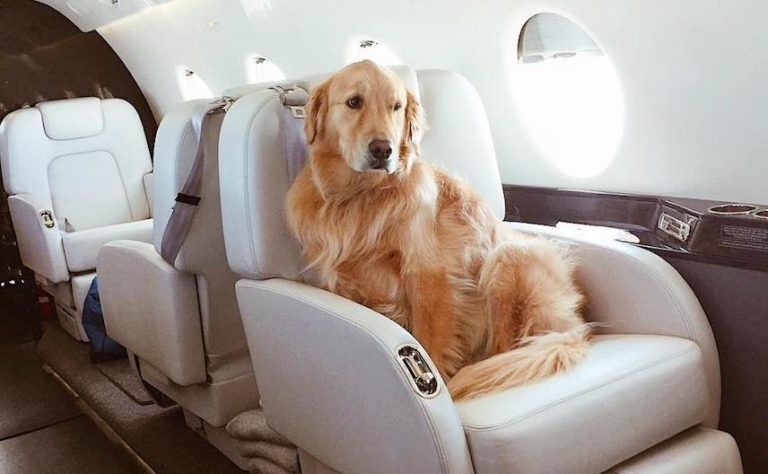 private charter flights for pets
